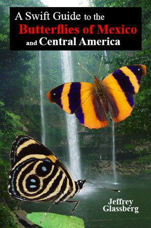 guide to mexican butterflies