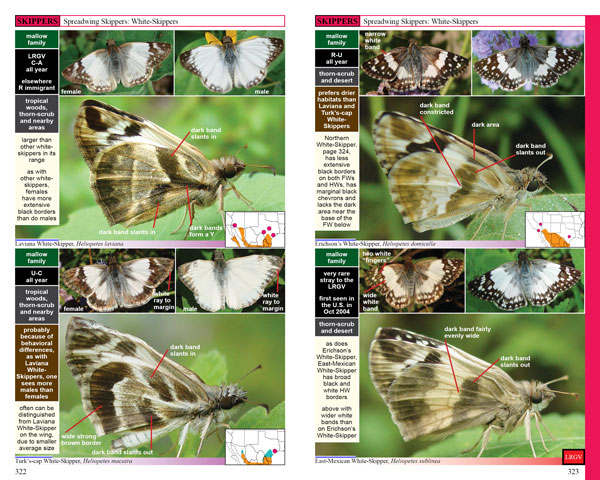 White-Skippers, pp322-323