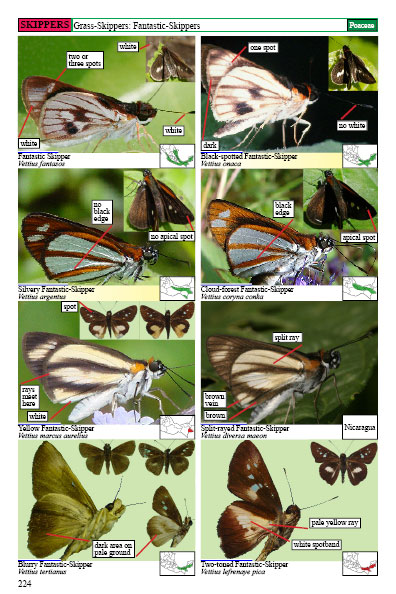 mexican butterflies page 224
