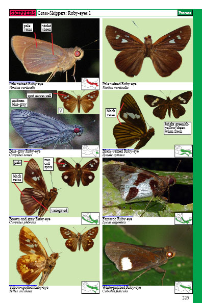 mexican butterflies page 225