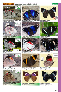 mexican butterflies page 105